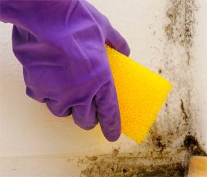 Как удалить плесень и грибок SADOLIN BIO-CLEANER